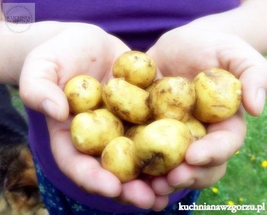 obiad, mlode ziemniaki