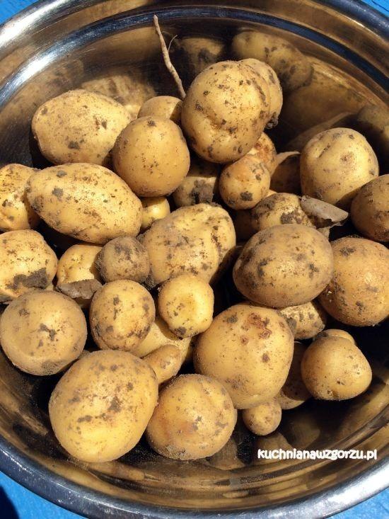 ziemniaki z ogródka