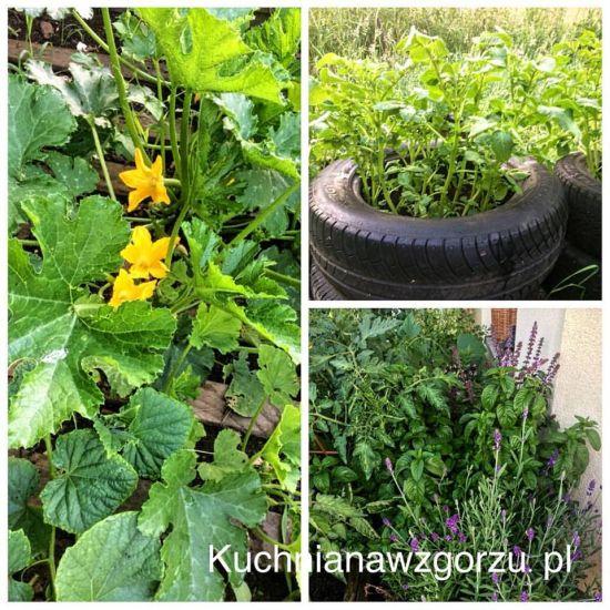 sadzimy-warzywnik